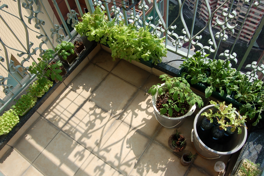 Lifestyle musings back to the basics frugal urban living for Balcony vegetable garden