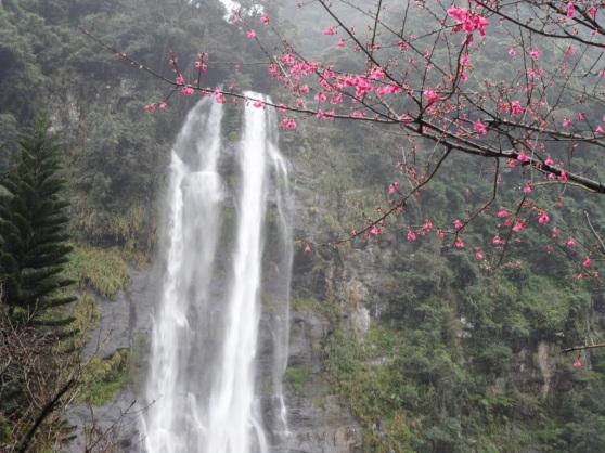 Plum Blossom in Wu Lai, Taipei